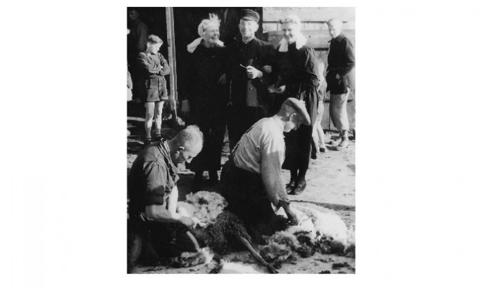 Fifties Friday: Sheep shearing for connoisseurs
