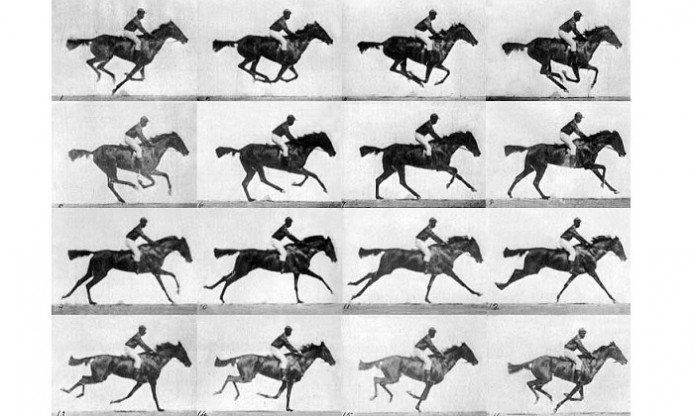 Muybridge's horse: a story of anatomy in action